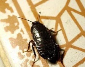 истребление тараканов Подольск