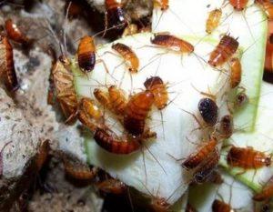 уничтожение тараканов Подольск